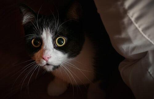 고양이의 호기심에 관한 일반적인 오해