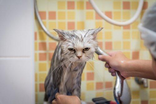 여러 반려동물을 목욕