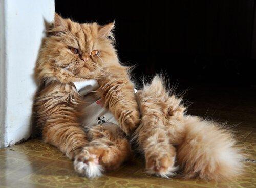 고양이가 아플 때 구토