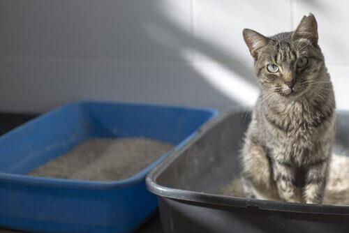 고양이가 아플 때 화장실