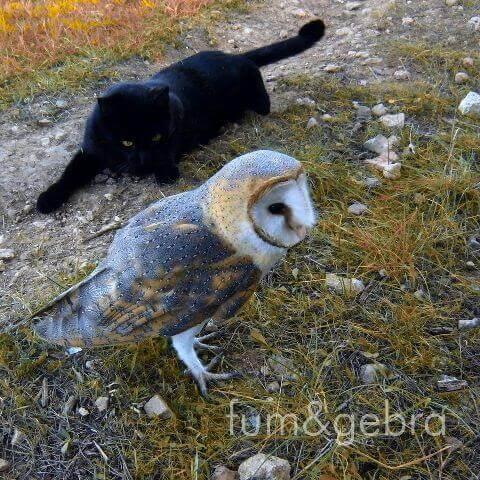 우정을 올빼미와 고양이