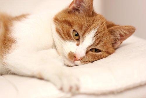고양이가 아플 때 보이는 행동과 증상