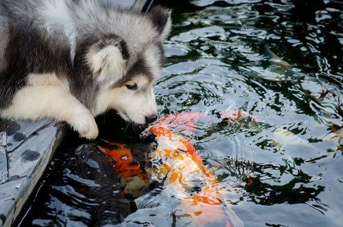 종을 극복한 동물들의 우정