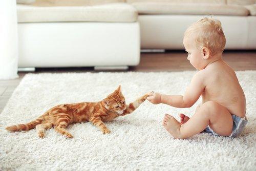 반려묘를 선택하는 아기