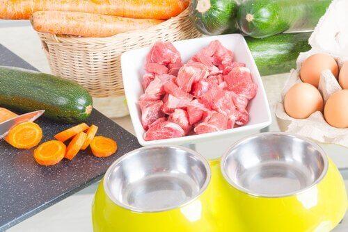 반려견의 음식 알레르기를 예방하는 법