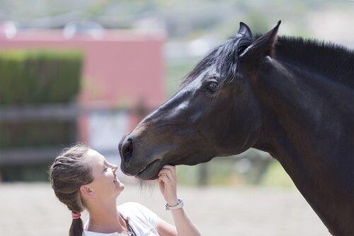 동물 복지에 자폐증