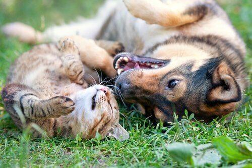 반려동물 중성화가 중요한 이유 4가지