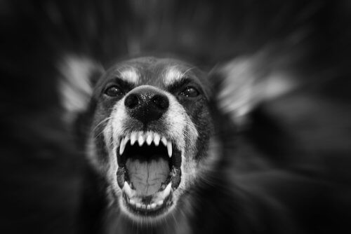 개가 공격적이 되는 이유