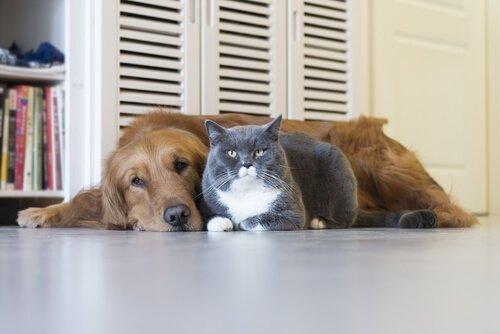 개와 고양이에게 치명적인 질병