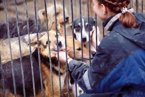 동물 보호소에서 자원 봉사자가 하는 일은?
