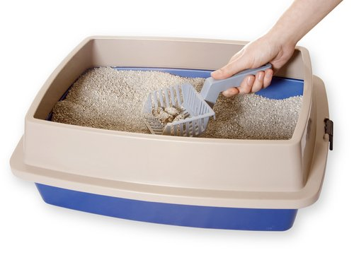 반려견 모래상자 변기