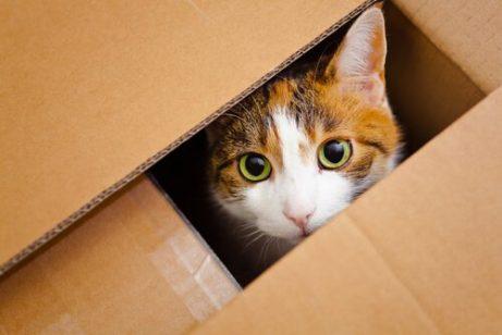 판지 상자 속 고양이