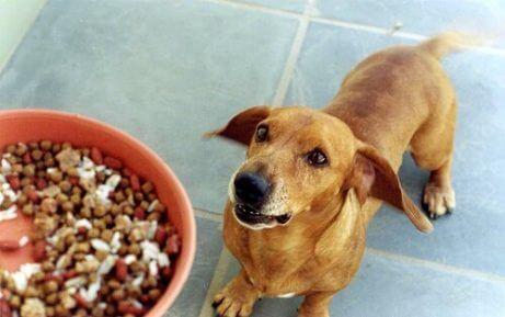 먹이를 기다리는 개