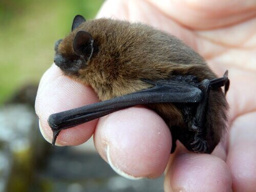박쥐를 구하는 호주 여성