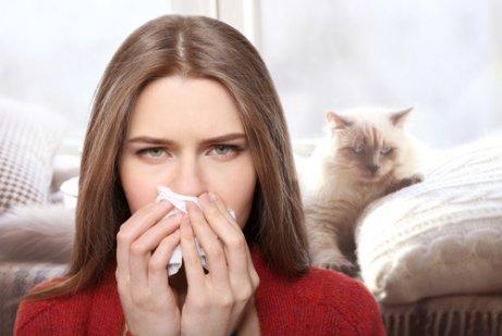 고양이 알레르기 - 콧물