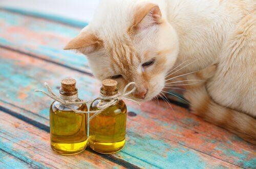 고양이에게 올리브유를 먹여도 될까?