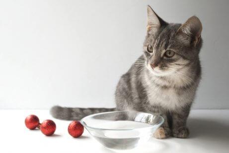 여름철에 고양이의 더위를 식히는 방법