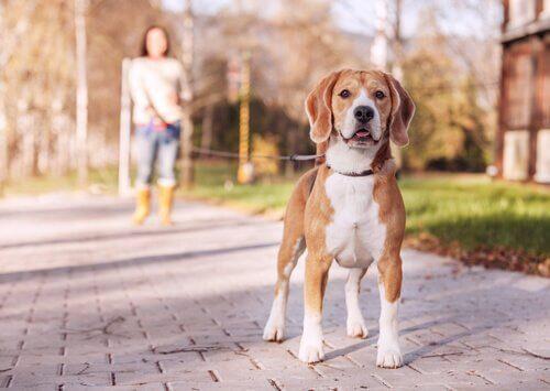 7가지 유형의 개 목줄을 사용하는 방법