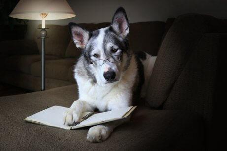 개에 대한 흥미로운 과학적 사실
