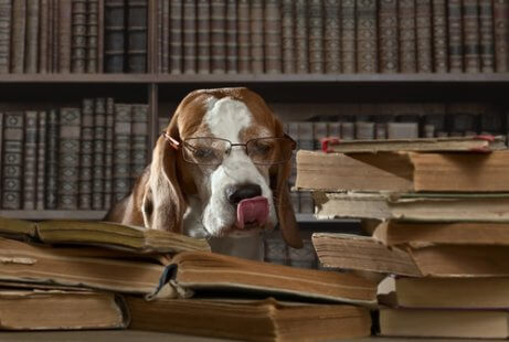 개와 과학