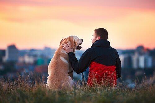 충성스러운 개들에 관한 놀라운 이야기 5가지