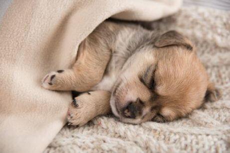 강아지는 얼마나 자야 할까