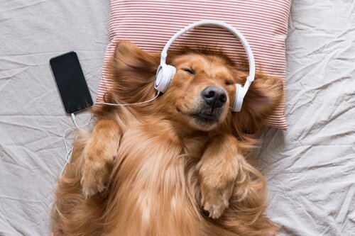 동물도 사람처럼 음악 감상을 할 수 있을까?