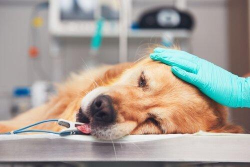 암에 걸린 동물들을 돕는 자연 치유법이 있을까?