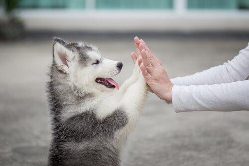 강아지를 처음 맞이한 후 대처법