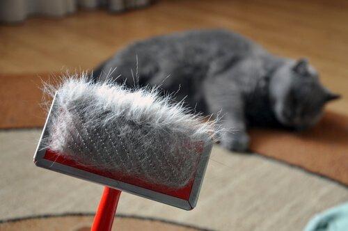 고양이의 털갈이 시기에 주의할 점