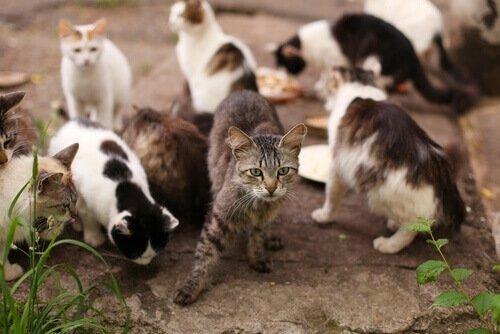 고양이 바이러스성 전염성