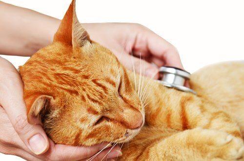고양이 바이러스성 코기관염의 원인, 증상과 치료
