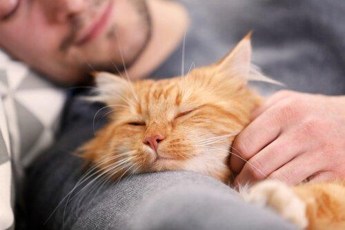 고양이와 같이 코골이