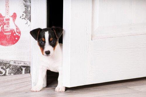 강아지가 새로운 집에 익숙해지도록 돕는 방법