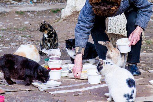 길고양이 무리에게 건식 사료