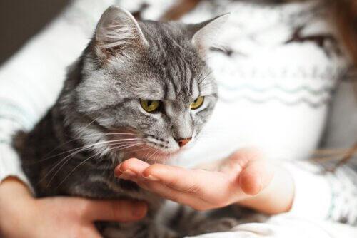 고양이에게 악수를 2