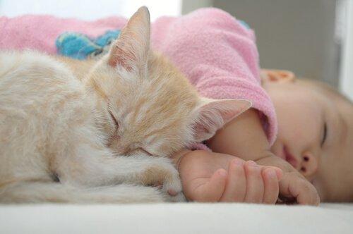 과연 고양이는 아기와 잘 지낼 수 있을까?