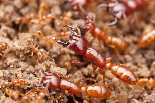 지구상에서 가장 치명적인 곤충 4가지