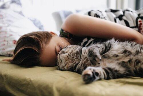 고양이와 같이 자는 가장 좋은 방법