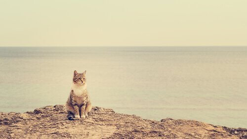 고양이와 휴가를 이탈리아