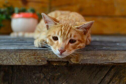 고양이 지아르디아증의 증상 및 전염