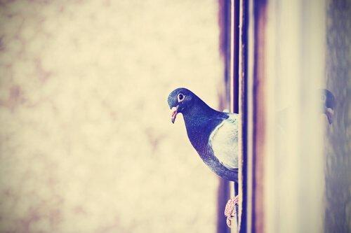 비둘기를 쫓아 버리는 7가지 방법