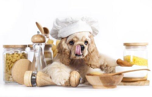 개에게 파스타를 먹여도 괜찮을까?