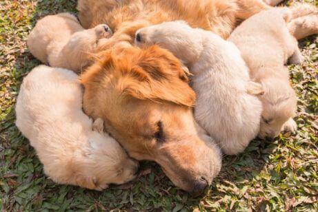 모유 먹는 강아지들