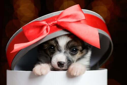 반려동물을 선물할 때 고려 사항 4가지