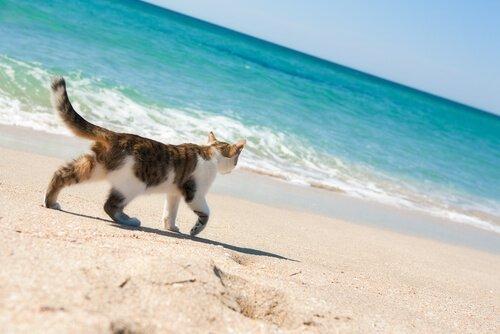 고양이와 휴가를 즐길 수 있는 해변이 있을까?