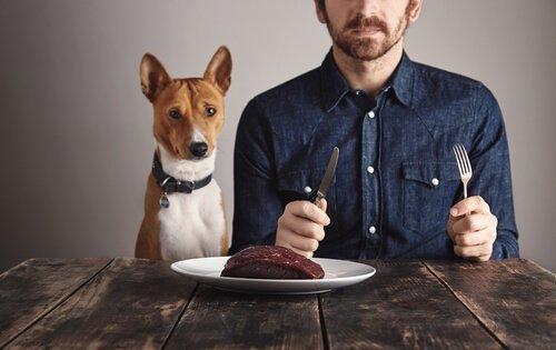 개에게 단백질 섭취가 얼마나 중요할까?