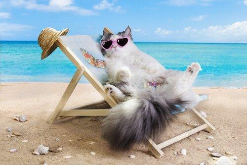 고양이와 휴가를 미국