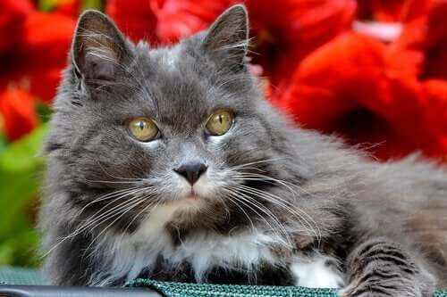 고양이 치매 치료