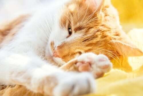 고양이의 치매 증상과 치료법